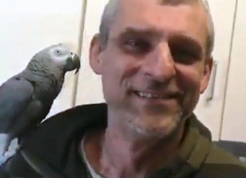 鸚鵡闖入愛爾蘭機場跑道 靠回應錄音確認身份