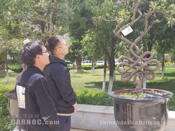 """昆明长水国际机场18棵""""奇树""""的故事"""