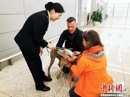 """""""宠物新政""""实施首月上海浦东国际机场入境宠物骤增"""