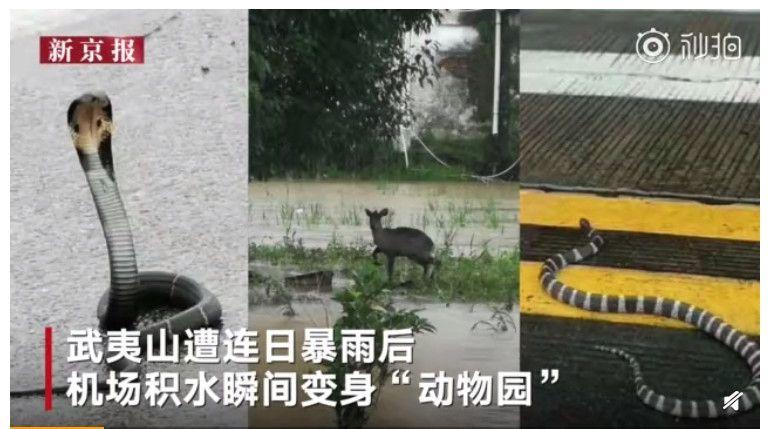 暴雨襲擊福建 武夷山機場撈魚