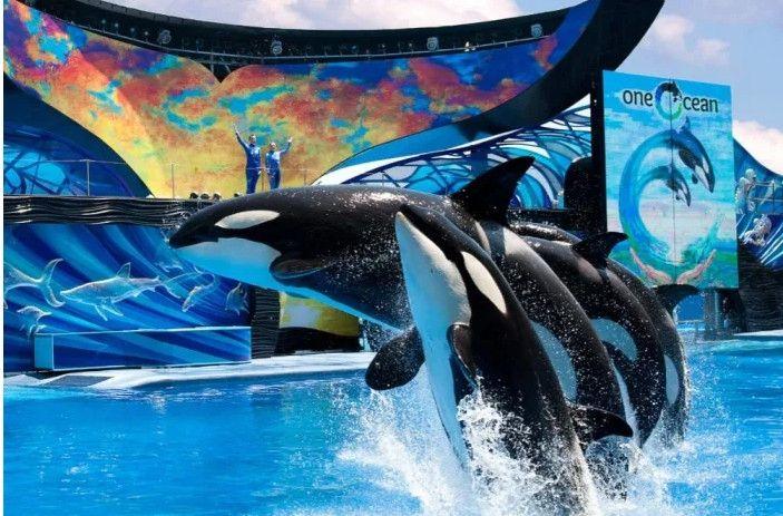为保护动物权益 美联航停止SeaWorld门票销售