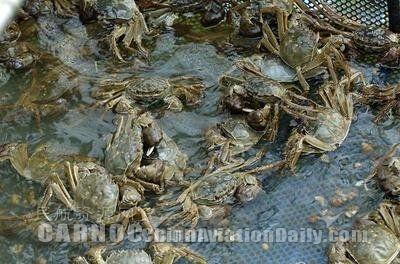 南京禄口机场优质服务保障螃蟹运输