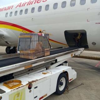 海航货运安全运输警犬,服务海南消防救援