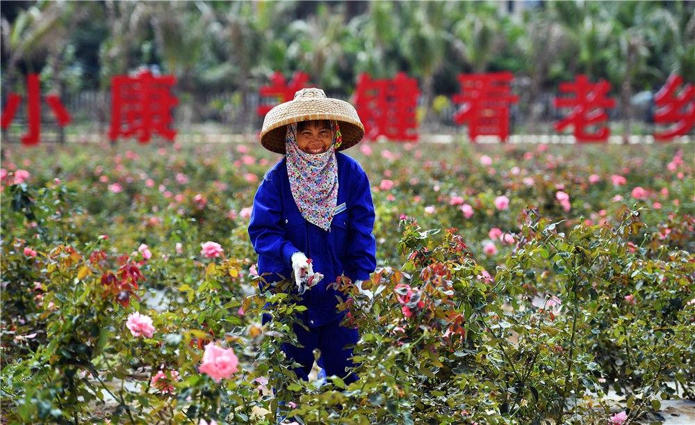 在海南三亚博后村,村民李玉梅在玫瑰谷园区内修剪玫瑰(2018年3月6日摄)。新华社记者