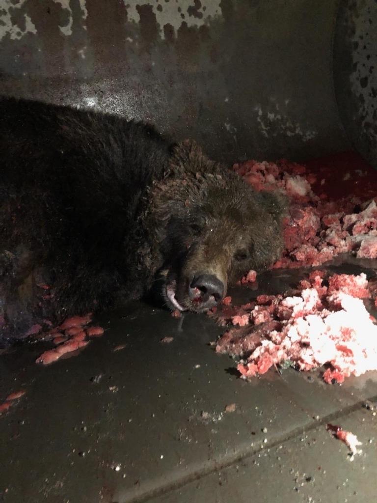 阿拉斯加航空客机撞上棕熊