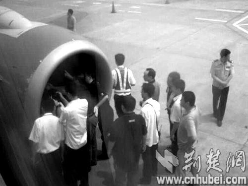 波音737武汉上空遭鸟击 机组处理得当获称赞 - 电子四组 - 浦东电子四组