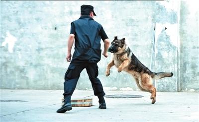 全国民航公安首支警犬队揭秘:民警不打警犬[图]